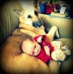 Немска овчарка куче с бебе