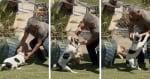 Нещастен случай с прасе