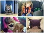 Невероятни домашни котки, които безспорно заслужават слава