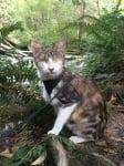 Незряща пътуваща котка