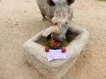 Бял северен носорог