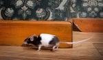 9-Носене на мишки