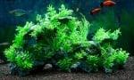 Нужна ли е светлина в аквариума