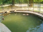 Нутрии в зоопарк Стара Загора