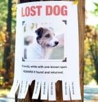 Обява за изгубено куче