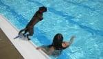 Обучение на кучето за плуване