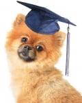 Предимства на училището за кучета