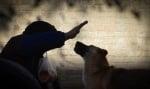Обущар и куче
