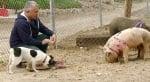 Обвинен в жестокост към животните