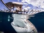Огромна риба под водата