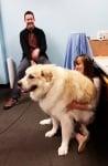 Огромно бяло куче