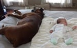 Огромно куче с бебе