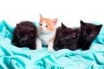 ОКотки котенца