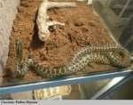 Опасен крокодил и змии в Пловдив