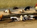 Опасни ли са бездомните котки