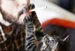 Опасни ли са цигарите за котките
