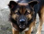 Опасно куче
