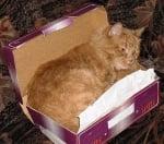 Оранжев котарак в кутия