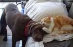 Оранжева котка с куче