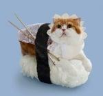 Оранжева котка с очила и куки за плетене върху суши