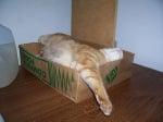 Оранжева котка в кутия