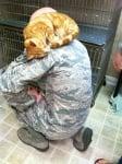 Оранжево коте с войник