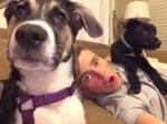 Осиновени кучета от Олимпиадата в Сочи