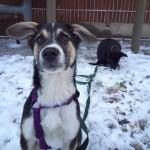 Осиновени кучета от Сочи на снега