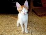 Осиновено котенце Мусиком