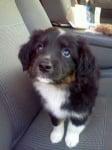 Осиновено малко кученце