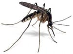 Общ преглед на комарите