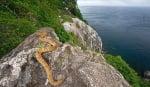 Остров на змиите