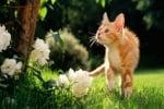 Палава котка