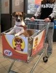 Пазаруване с кучето