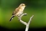 Песента на птиците действа лечебно