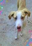 Кучето Бобка :)