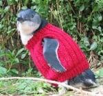 Пингвинче с пуловер