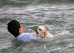 Плуване с кученце