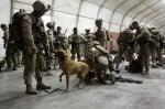 Подготовка на кучета в Афганистан