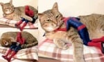 Котката - подкрепа за супергерои