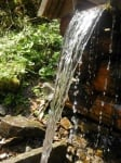 Полезна ли е изворната вода за рибките