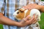 10 важни съвета при отглеждането на морско свинче