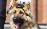Полицейско куче с камера