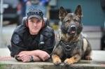 Полицейските кучета преди и сега - всеотдаен труд и дисциплина