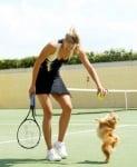Померанът Долче е на тенис корта