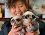 Появиха се кученца, приличащи на мечета панди