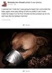 Пост на кучето със залепена с тиксо уста