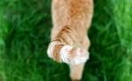 3-Потрепване с опашка
