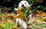 Поведение при малко куче