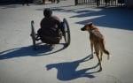 Предано куче